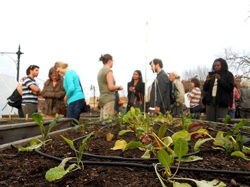 Urban agriculture event